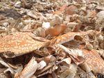 Menengok Nasib Pemburu Cangkang Rajungan di Cirebon