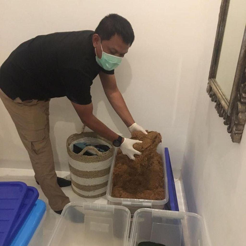 Polri Gerebek Home Industry Ganja Sintesis di Bali