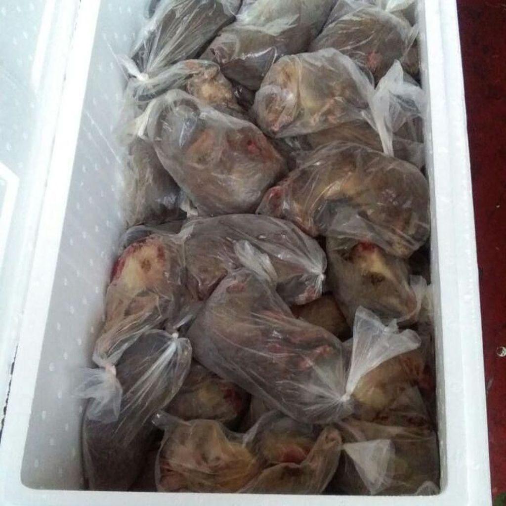 Hii...14 Boks Isi Ribuan Tikus Mati Diamankan di Gorontalo
