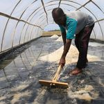 Lindungi Petani dari Tengkulak, KKP Bangun Gudang Garam di Karawang