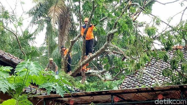Petugas memangkas pohon tumbang yang menimpa rumah warga di Kebumen.