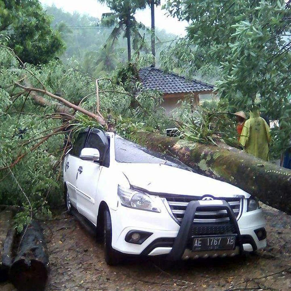 Mobil Ini Ringsek Setelah Tertimpa Pohon Besar