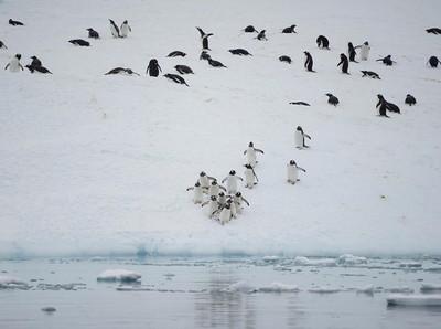 Misi Menyelamatkan Kehidupan di Antartika
