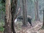 Gajah di India Tertangkap Kamera Sedang Merokok