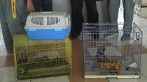 Terbongkar! Perdagangan Satwa Dilindungi Lewat FB di Probolinggo