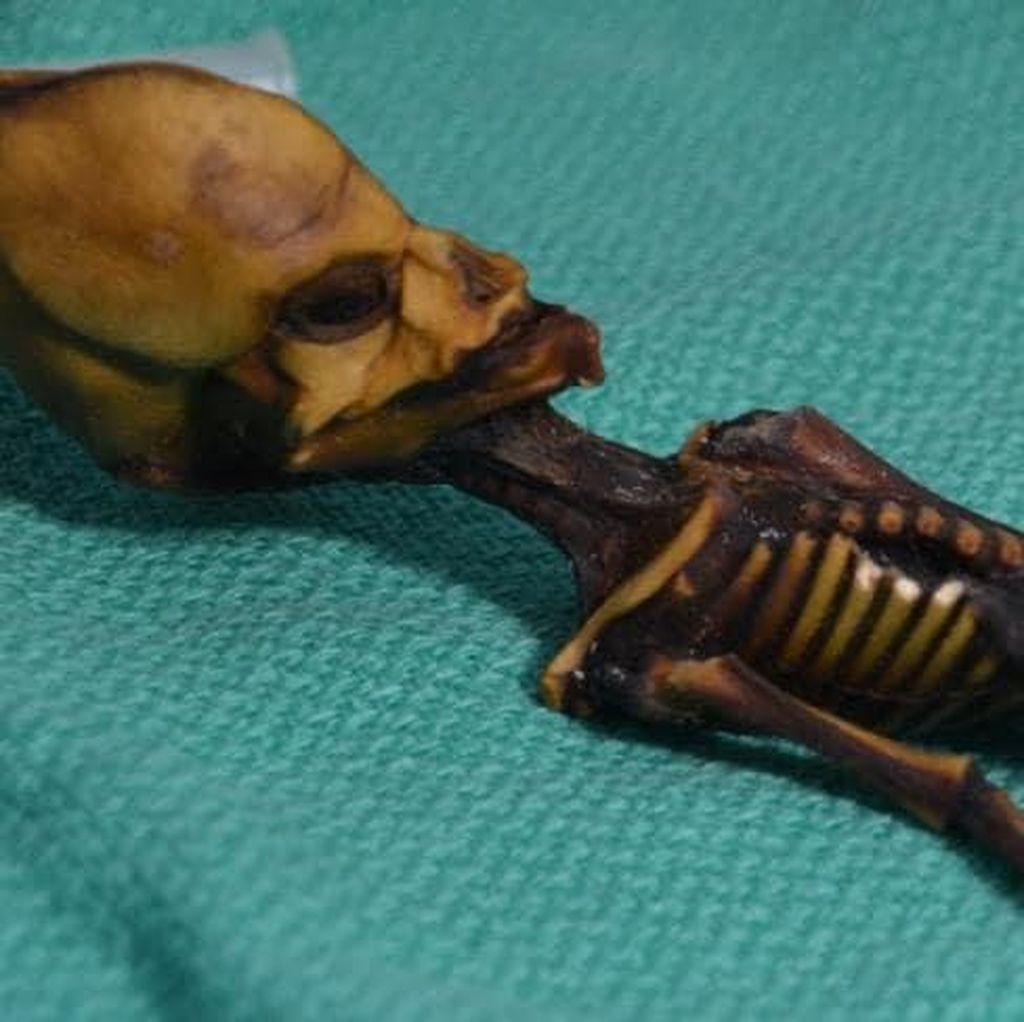 Fakta Mengejutkan Soal Mumi Alien Misterius di Chile