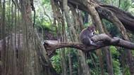 Gemasnya Monyet di Ubud Monkey Forest