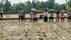 Dengar Keluhan Petani, TB Hassanudin Ikut Turun ke Sawah