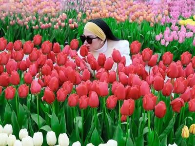 Syahrini yang Kegirangan di Kebun Bunga Tulip Belanda