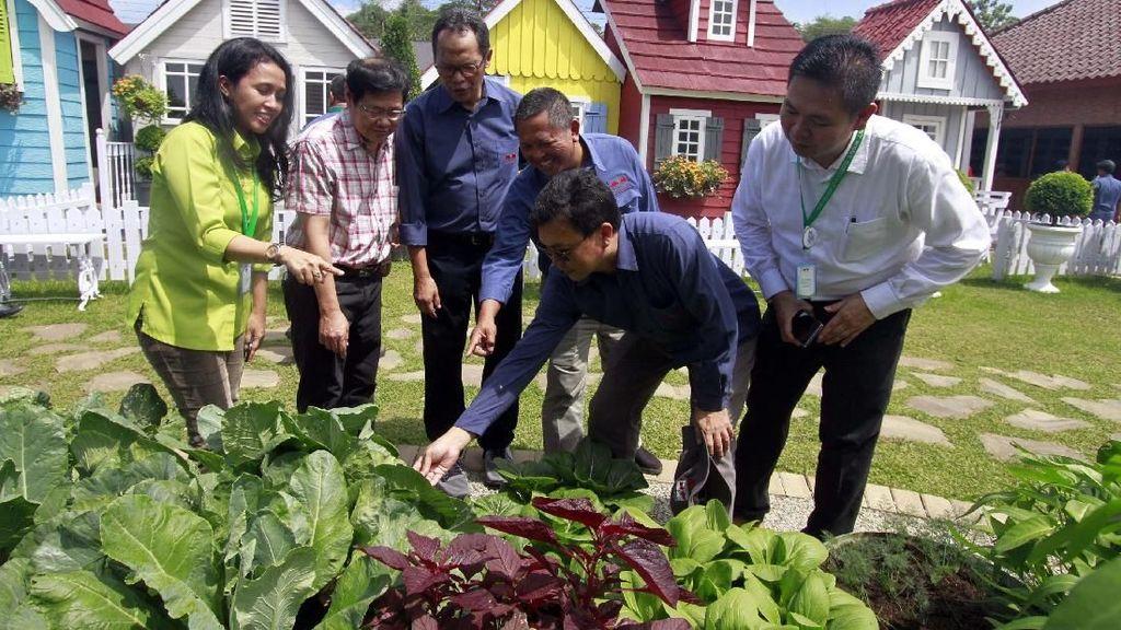 Melihat Pertanian di Tengah Kota