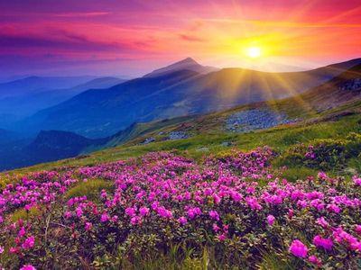 Katanya Lembah Bunga Seindah Surga