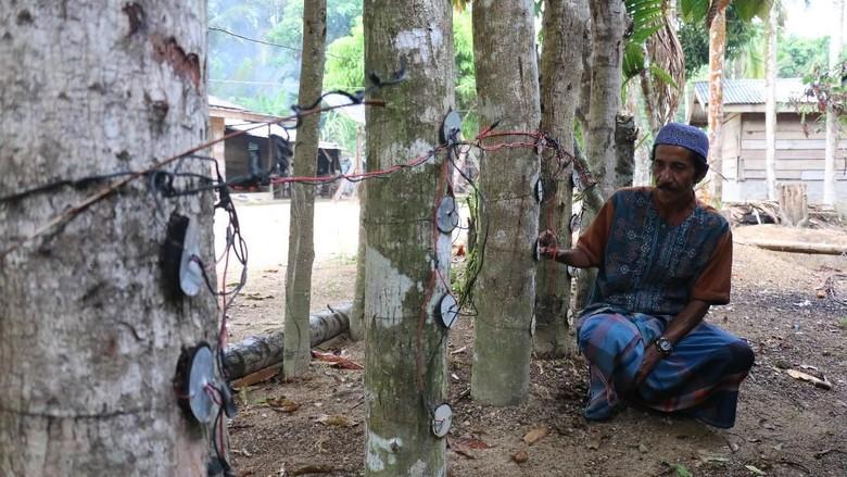 Dulu Bikin Heboh, Listrik Pohon Kedondong Kini Tinggal Cerita