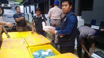 Hendak Diselundupkan ke Singapura, Benih Lobster Rp 10 M Diamankan