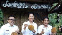 Saat Menteri Rini Soemarno Pesta Durian di Banyuwangi