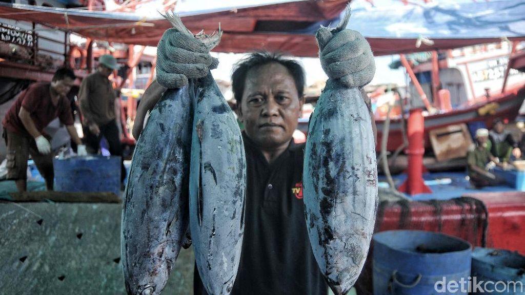 Kondisi Terkini Pelabuhan Ikan Muara Baru yang Bakal Jadi Modern