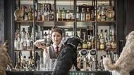 Keren! Bar Ini Sajikan Dogtail yang Bisa Dinikmati Anjing Peliharaan Pengunjung