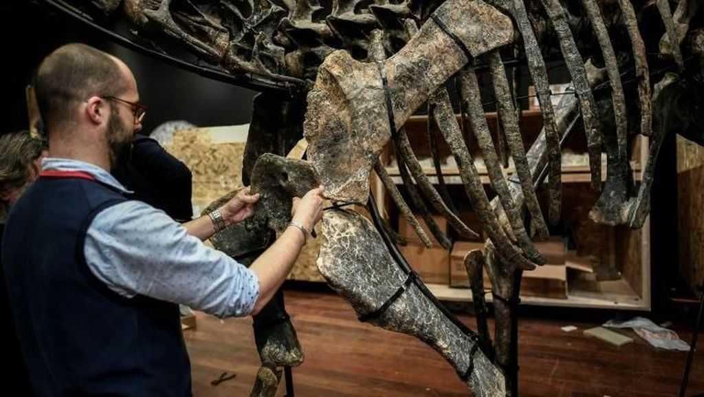 2 Fosil Dinosaurus Dilelang di Paris, Siapa Tertarik Membeli?