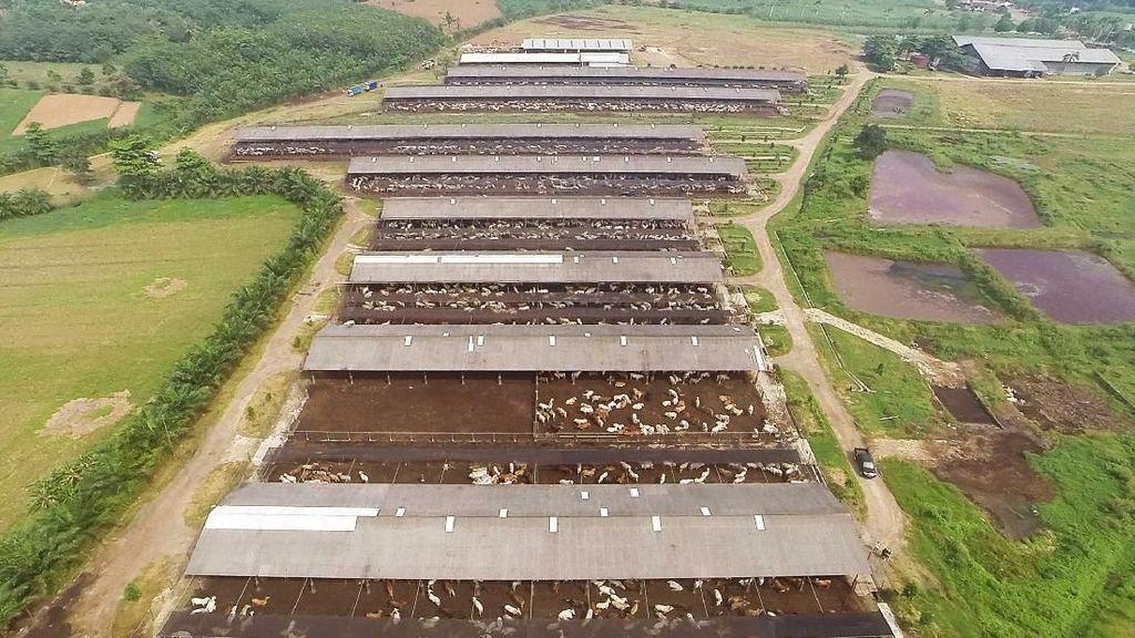 Perusahaan Peternakan Australia Jual Asetnya di Indonesia