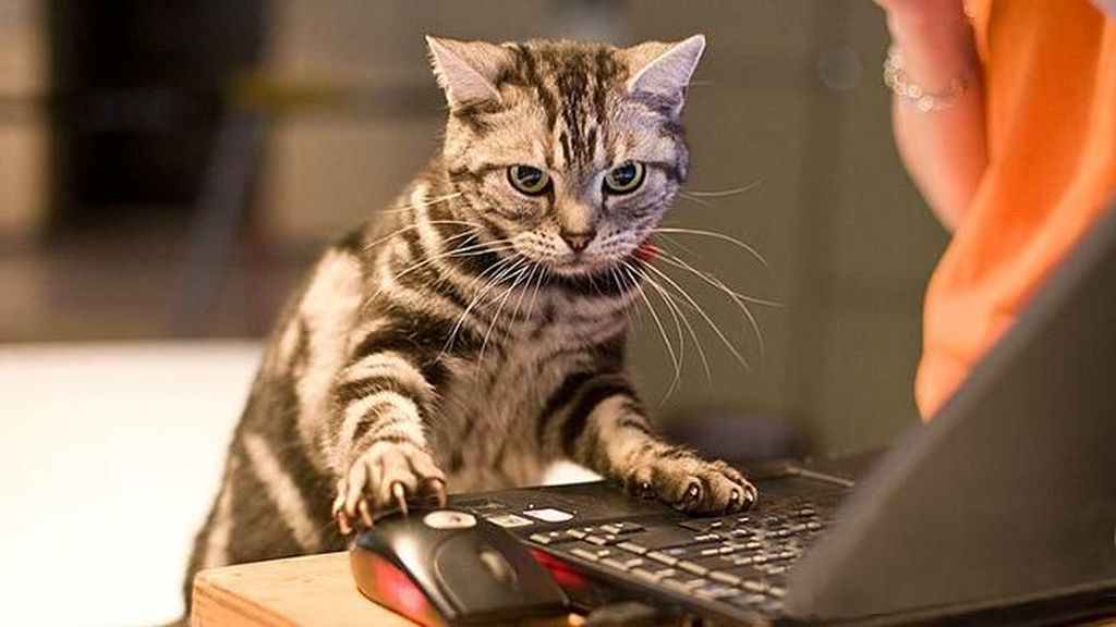 Kocak, Perubahan Tingkah Kucing Gara-gara Teknologi