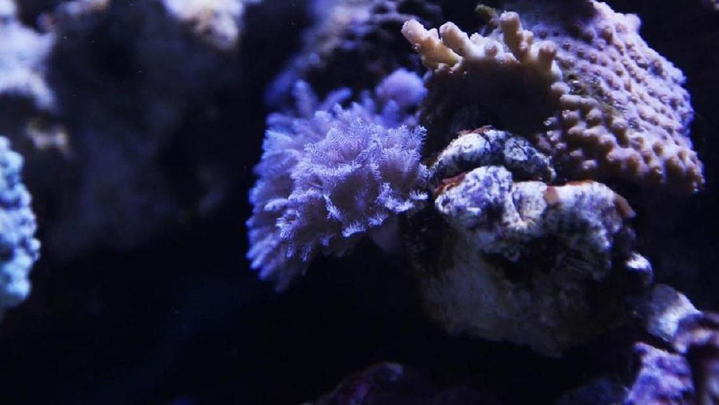Terpapar Racun Koral dari Akuarium, Sekeluarga Masuk Rumah Sakit