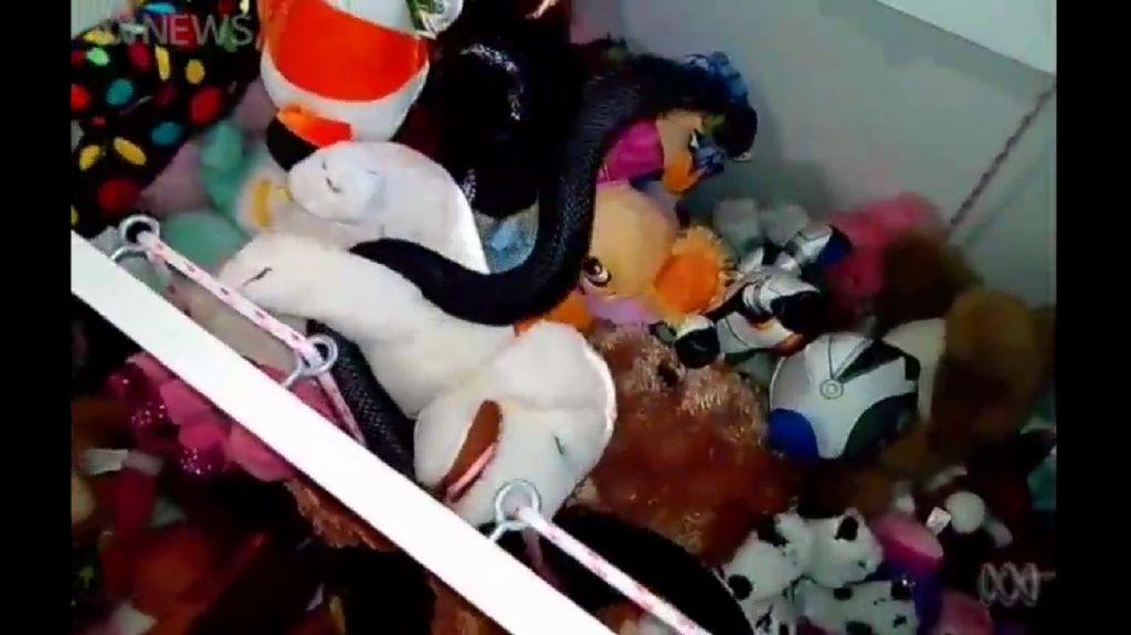 Ngeri! Ada Ular Berbisa Sembunyi di Balik Mainan Anak
