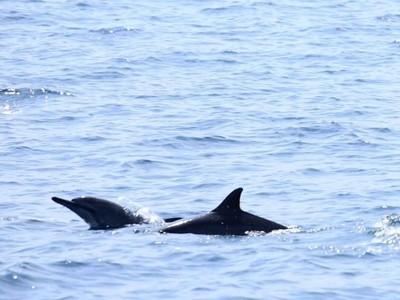 Liburan ke Lampung, Ada Lumba-lumba di Pulau Pisang