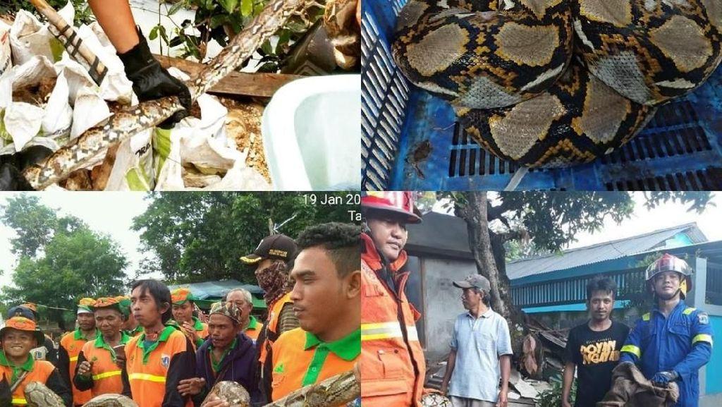 Ini Deretan Ular yang Muncul di Jakarta dalam 4 Bulan Terakhir