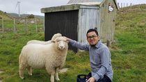 Startup Lokal Berburu Ternak Sampai ke Selandia Baru