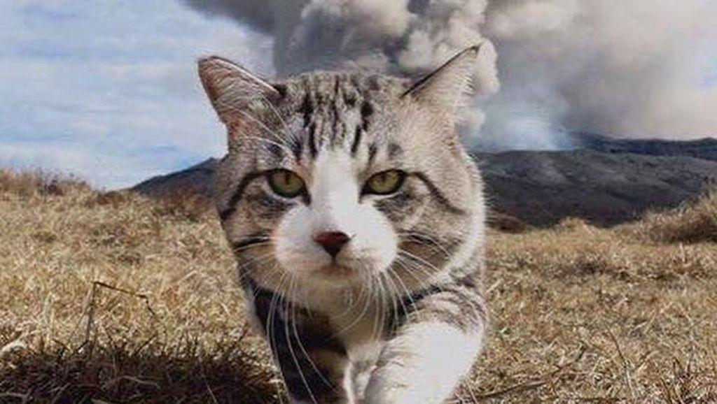 Super Gemas! Lihat Deh Gayanya Kucing Fashionable Ini