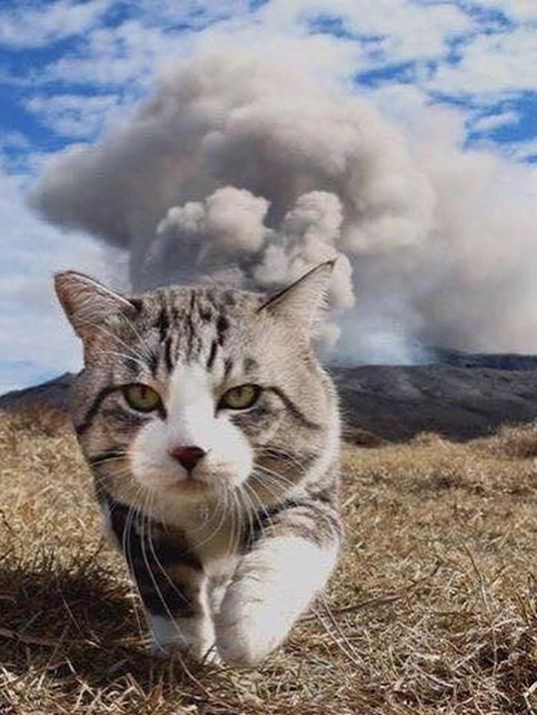 Foto: Cat-genic! Gaya Kucing Ini Mirip Banget Model
