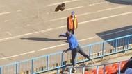 Fans di Rusia Lempar Ayam ke Lapangan di Tengah Pertandingan