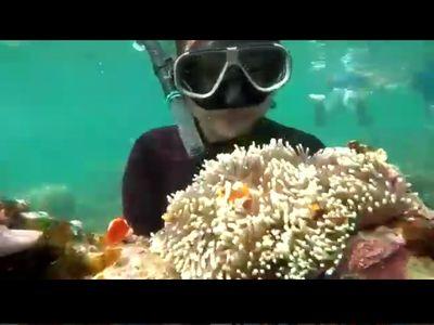 Video Wisatawan Angkat Karang Laut, Hilang di Instagram