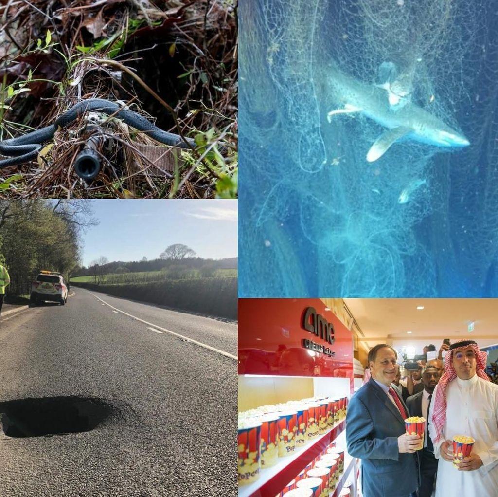 Riuh Dunia dalam Gambar: Bioskop di Saudi, Jaring Hantu di Karibia
