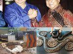 Berita Heboh: Pesta Seks Piton, Kapal TKI Terombang-ambing