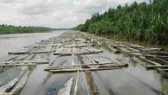 Ribuan Kayu di Sungai Musi Dibiarkan Tak Bertuan, Ini Penampakannya