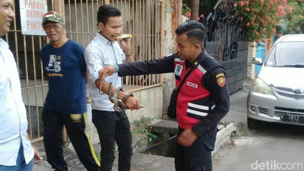 Ular Piton Melintas Depan Rumah Kagetkan Warga Tambaksari Surabaya