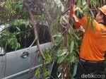 Pohon Tumbang Timpa Motor dan 2 Mobil di Kebumen