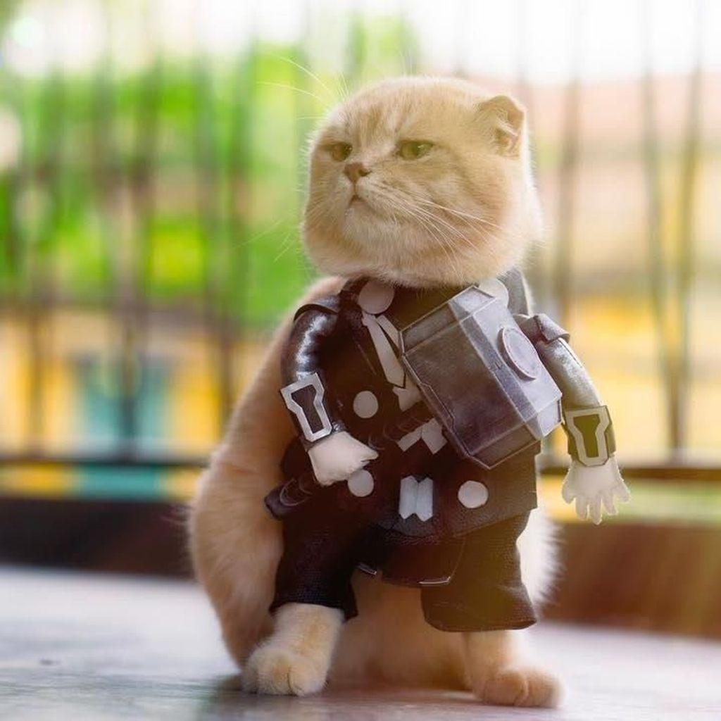 Lucunya Kucing Viral Bergaya Avengers