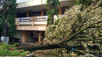 Puting Beliung Tumbangkan 5 Pohon di Kampus STPMD Yogya
