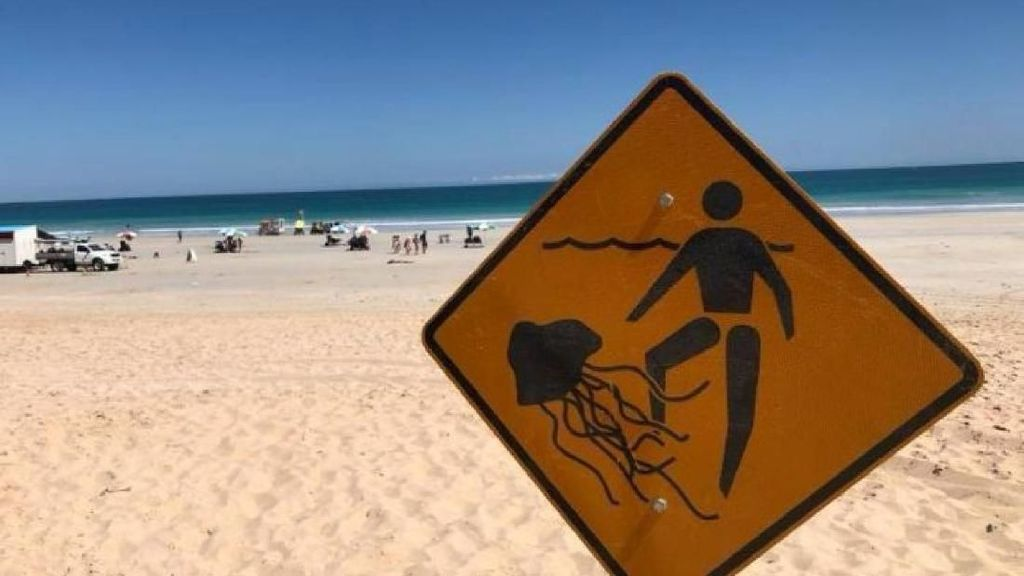 Pantai Ditutup karena Ubur-Ubur Mematikan di Australia Barat