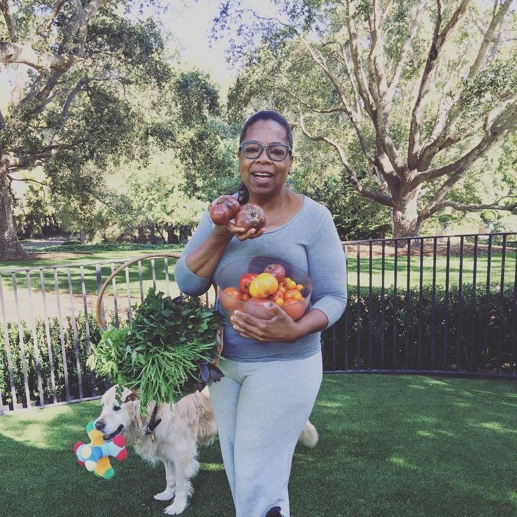Hobi Berkebun, Lihat Aksi Oprah Panen Buah dan Sayur Segar di Halamannya!