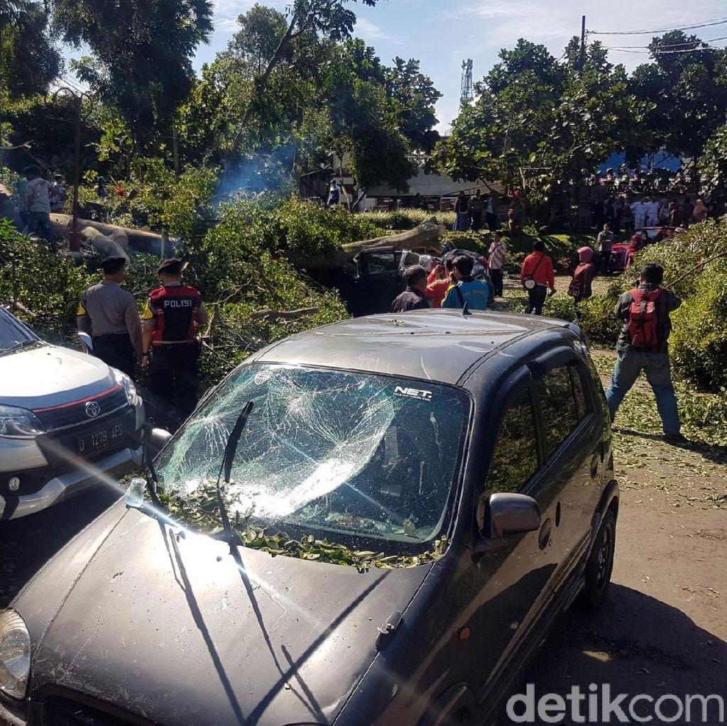Pohon Tumbang yang Timpa Belasan Mobil di Sukabumi Berusia 100 Tahun