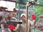 Intip Keseruan Ratusan Tupai Dilepasliarkan di Balai Kota Surabaya
