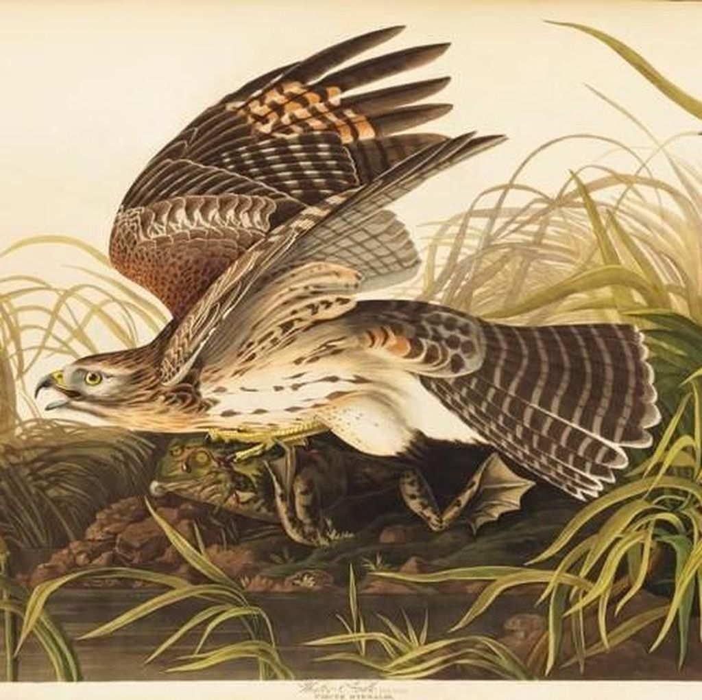 Ilustrasi Burung dari Buku Abad ke-19 Dilelang Rp 166 Miliar