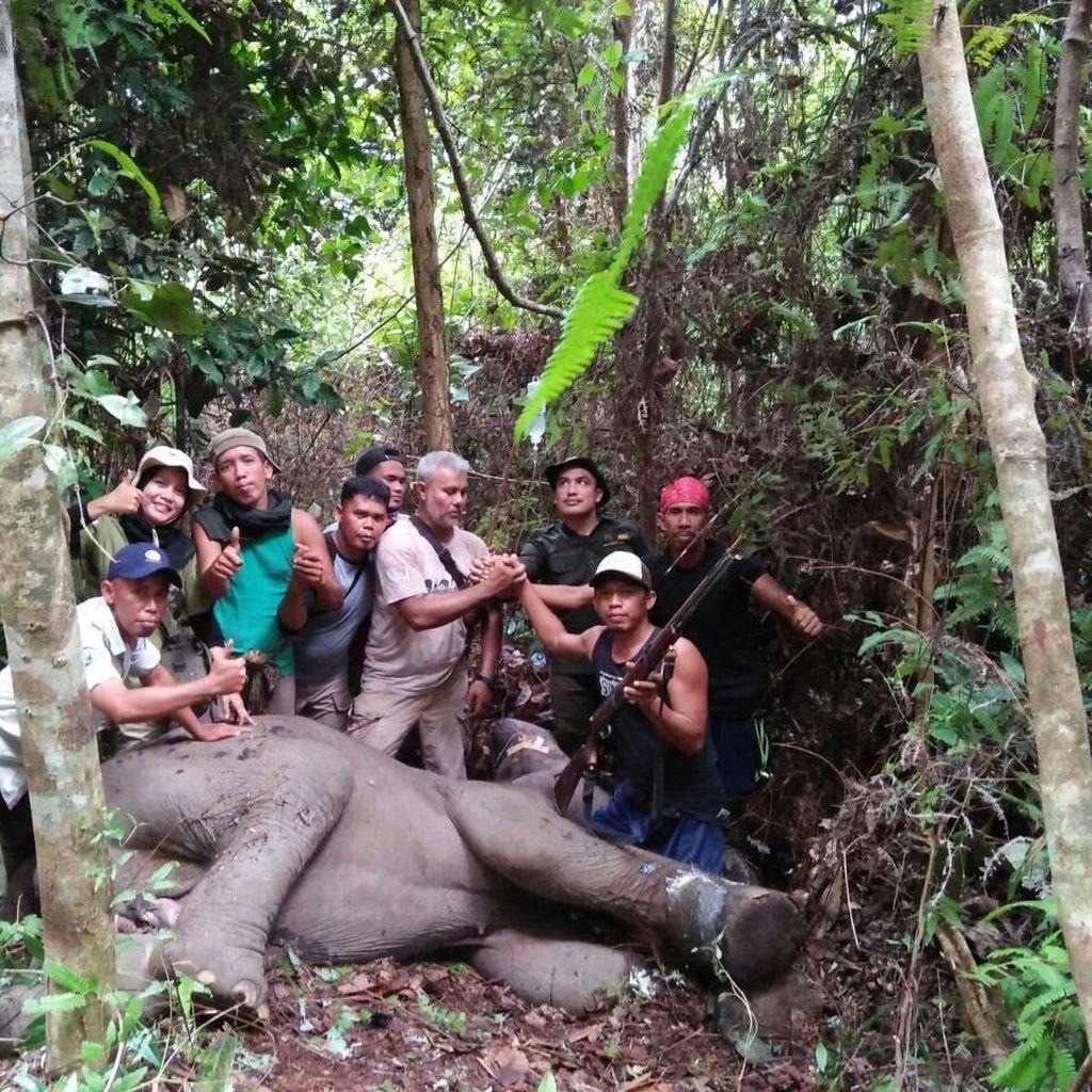 Anak Gajah di Riau Kakinya Terluka Kena Jeratan Babi