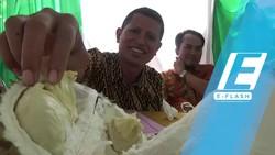 Purworejo Gelar Audisi Cari Raja Durian Baru, Yuk Ikutan!
