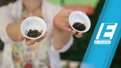 Yuk! Belajar Menyeduh Green Tea dengan Pakar Teh Ratna Soemantri