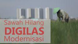 Terdesaknya Sawah di Jakarta, Bertahan Dikepung Hutan Beton