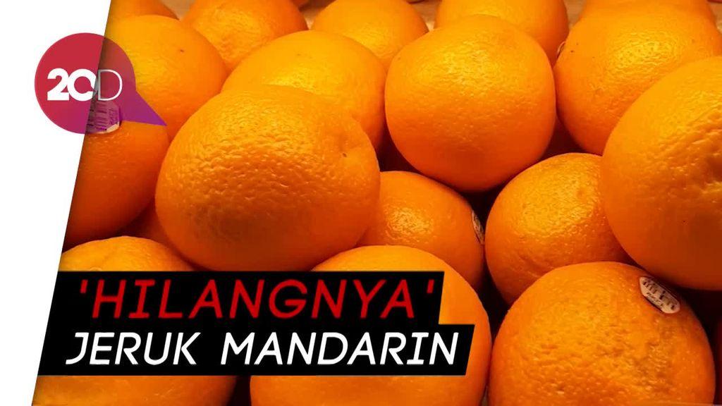 Langka Jelang Imlek, Jeruk Ini Bisa Jadi Pengganti Jeruk Mandarin
