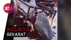 Netizen Marah Lihat Video Hiu Diangkut Gerobak Motor